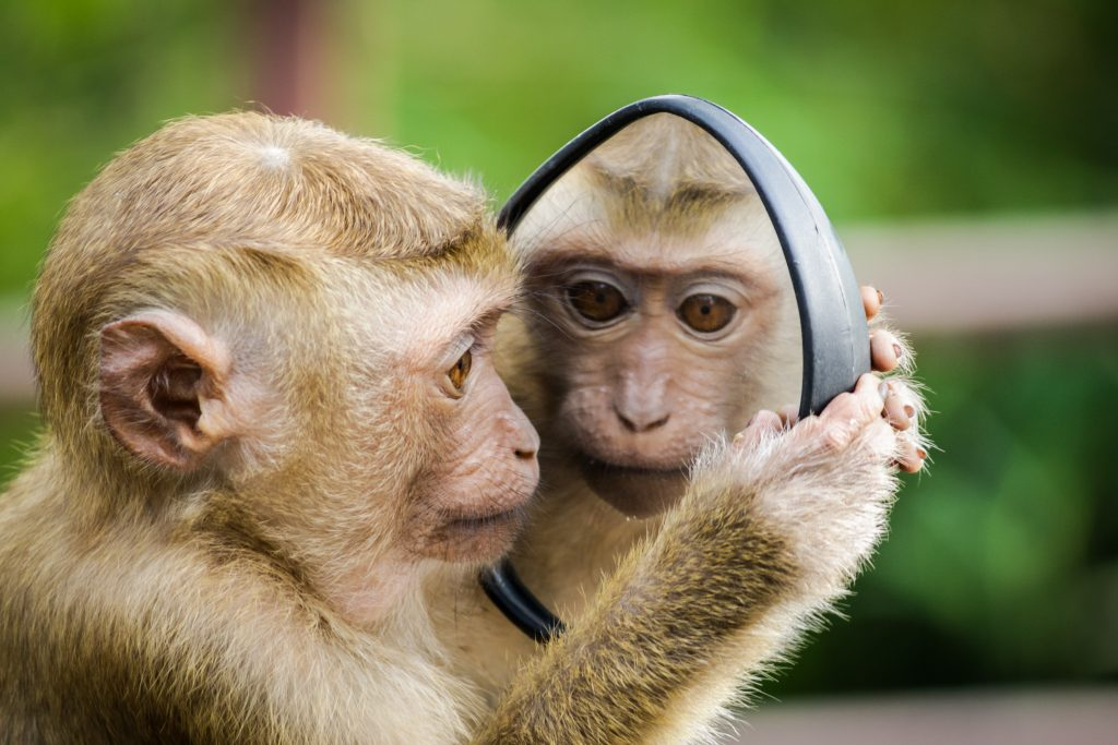 Bristol copywriting monkey