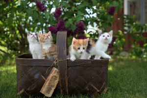 Bristol copywriting cats