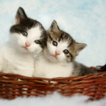 Copywriting cats and kittens