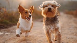 SEO Copywriter image of two dogs running