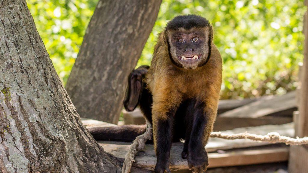 Copywriting monkey wants his money