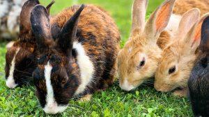 Rabbits reading