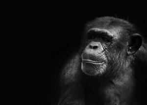 Copywriting monkey